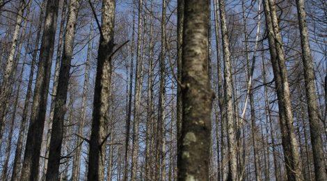 北海道の森